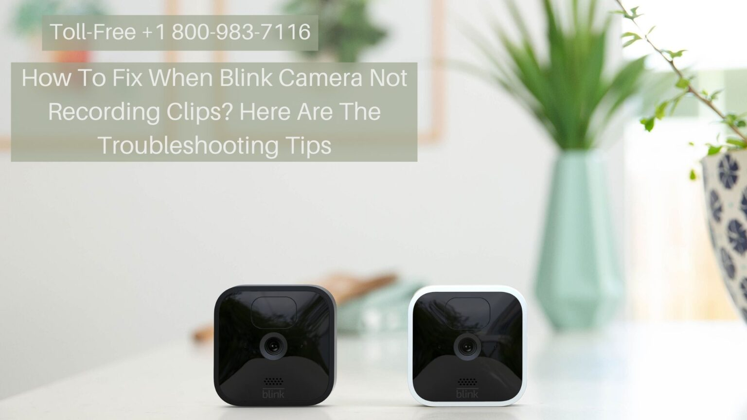 Blink Camera Live View Not Working 1-8009837116 Blink Camera Not Recording Fixes