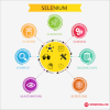 Selenium Training and Certification Course – Mindmajix