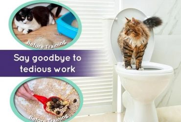 Provide professional services for cat training and life
